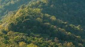 Το δάσος στο πράσινο βουνό κορυφών υψώματος με την ηλιοφάνεια πρωινού απόθεμα βίντεο