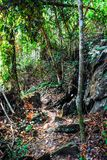 Το δάσος στο Sri κάθισε το εθνικό τοπίο πάρκων NA Lai Cha, Sukhothai, Ταϊλάνδη Στοκ εικόνες με δικαίωμα ελεύθερης χρήσης