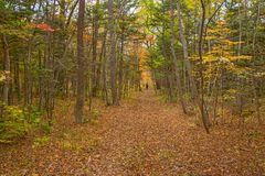 Το δάσος φθινοπώρου, όλο το φύλλωμα είναι χρωματισμένο με το χρυσό χρώμα στη μέση του δασικού δρόμου Στοκ φωτογραφία με δικαίωμα ελεύθερης χρήσης