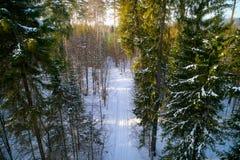 Το δάσος χειμερινών πεύκων που φωτογραφίζεται από το quadcopter άνωθεν Στοκ Εικόνες