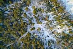 Το δάσος χειμερινών πεύκων που φωτογραφίζεται από το quadcopter άνωθεν Στοκ Εικόνα