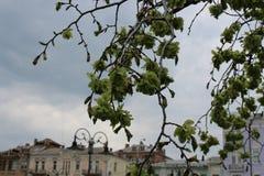 Το δέντρο άνθισε την άνοιξη πράσινα στοκ φωτογραφία