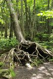 Το δέντρο αγάπης στοκ φωτογραφία με δικαίωμα ελεύθερης χρήσης