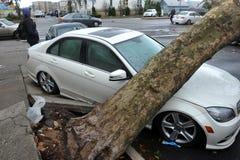 Το δέντρο αισθάνθηκε κάτω στο αυτοκίνητο στοκ εικόνες με δικαίωμα ελεύθερης χρήσης