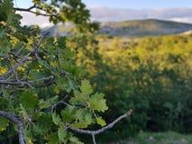 Το δέντρο βγάζει φύλλα Στοκ εικόνα με δικαίωμα ελεύθερης χρήσης