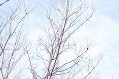 Το δέντρο διακλαδίζεται χειμερινά μικρά πουλιά στο μπλε ουρανό κρητιδογραφιών Στοκ Εικόνες