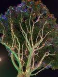 Το δέντρο εξωραΐζεται με τα φω'τα υπέροχα πυράκτωσης σε Disneyland Στοκ εικόνα με δικαίωμα ελεύθερης χρήσης