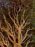 Το δέντρο εξωραΐζεται με τα φω'τα υπέροχα πυράκτωσης σε Disneyland Στοκ Εικόνες