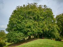 Το δέντρο επιθυμίας πλησίον από Avebury σε Engand στοκ εικόνες