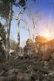 Το δέντρο ζουγκλών που καλύπτει τις πέτρες των καταστροφών ναών σε Angkor Wat Siem συγκεντρώνει, Καμπότζη, 12ος αιώνας Στοκ εικόνα με δικαίωμα ελεύθερης χρήσης