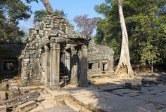 Το δέντρο ζουγκλών που καλύπτει τις πέτρες των καταστροφών ναών σε Angkor Wat Siem συγκεντρώνει, Καμπότζη, 12ος αιώνας Στοκ Εικόνες