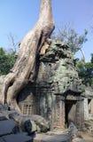 Το δέντρο ζουγκλών που καλύπτει τις πέτρες των καταστροφών ΧΙΙ ναών αιώνας θορίου σε Angkor Wat Siem συγκεντρώνει, Καμπότζη Στοκ Εικόνες