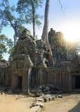 Το δέντρο ζουγκλών που καλύπτει τις πέτρες των καταστροφών ΧΙΙ ναών αιώνας θορίου σε Angkor Wat Siem συγκεντρώνει, Καμπότζη Στοκ φωτογραφίες με δικαίωμα ελεύθερης χρήσης