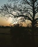 Το δέντρο ηλιοβασιλέματος στοκ εικόνες