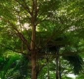 Το δέντρο η άποψη από το διάδρομο πυλών με το φως του ήλιου και τη σκιά ήλιων Στοκ φωτογραφία με δικαίωμα ελεύθερης χρήσης