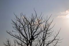 Το δέντρο και ο ουρανός Στοκ Φωτογραφία