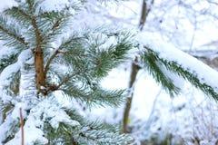 Το δέντρο καλύπτεται με το χιόνι στοκ φωτογραφίες με δικαίωμα ελεύθερης χρήσης