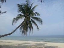 Το δέντρο καρύδων στην παραλία στοκ φωτογραφία με δικαίωμα ελεύθερης χρήσης
