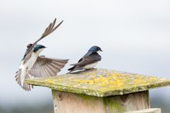 Το δέντρο καταπίνει το πουλί Στοκ Φωτογραφίες