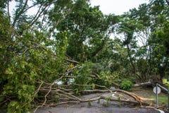 Το δέντρο καταστράφηκε από την ένταση θύελλας ` s Στοκ εικόνα με δικαίωμα ελεύθερης χρήσης