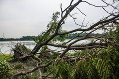 Το δέντρο καταστράφηκε από την ένταση θύελλας ` s Στοκ φωτογραφία με δικαίωμα ελεύθερης χρήσης