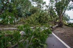 Το δέντρο καταστράφηκε από την ένταση θύελλας ` s Στοκ Φωτογραφία