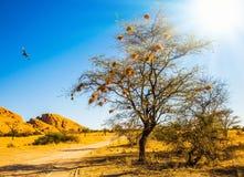 Το δέντρο με τις φωλιές του πουλιού στοκ εικόνα