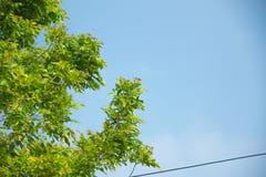 Το δέντρο με τον ουρανό Στοκ φωτογραφία με δικαίωμα ελεύθερης χρήσης