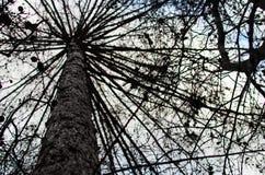 Το δέντρο μοιάζει με την ομπρέλα Στοκ φωτογραφίες με δικαίωμα ελεύθερης χρήσης