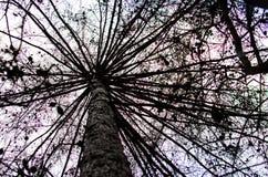 Το δέντρο μοιάζει με την ομπρέλα Στοκ εικόνα με δικαίωμα ελεύθερης χρήσης
