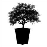 Το δέντρο μπονσάι, μαύρη σκιαγραφία του μπονσάι, απαρίθμησε την εικόνα, διανυσματική απεικόνιση, ελεύθερη απεικόνιση δικαιώματος