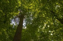 Το δέντρο ολοκληρώνει το υπόβαθρο στην ηλιόλουστη ημέρα Στοκ εικόνες με δικαίωμα ελεύθερης χρήσης