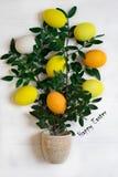 Το δέντρο Πάσχας με τα πολύχρωμα αυγά Πάσχας σε ένα άσπρο υπόβαθρο με το πράσινο ελατήριο διακλαδίζεται Στοκ Εικόνες