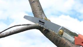 Το δέντρο περικοπής διακλαδίζεται την άνοιξη οπωρώνας φιλμ μικρού μήκους
