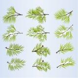 Το δέντρο πεύκων διακλαδίζεται πολύβλαστο κωνοφόρο φθινοπωρινό και το χειμερινό χιονώδες φυσικό υπόβαθρο έθεσε σε δύο τη διανυσμα διανυσματική απεικόνιση