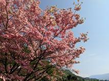 Το δέντρο στον κήπο στοκ εικόνες