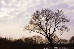 Το δέντρο την άνοιξη Στοκ Φωτογραφίες
