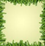 Το δέντρο του FIR διακλαδίζεται πλαίσιο Στοκ φωτογραφία με δικαίωμα ελεύθερης χρήσης