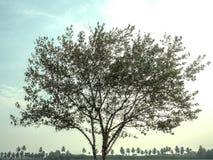 Το δέντρο, τροπικά δέντρα που χρησιμοποιούνται για το σχέδιο, τη διαφήμιση και την αρχιτεκτονική στοκ εικόνα με δικαίωμα ελεύθερης χρήσης