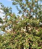 το δέντρο, φύση, πράσινη, φύλλα, κλάδος, φύλλο, φυτό, λουλούδι, ουρανός, καλοκαίρι, λευκό, άνθος, δάσος, μπλε, εποχή, κήπος, cher στοκ φωτογραφία με δικαίωμα ελεύθερης χρήσης