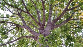 Το δέντρο χιλίων κλάδων στοκ εικόνες