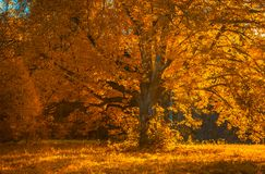 Το δέντρο Autunm στο πάρκο, τελειοποιεί το τοπίο πτώσης Στοκ φωτογραφία με δικαίωμα ελεύθερης χρήσης