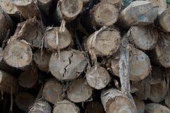 Το δέντρο Cutted καταγράφει το σωρό μπροστινής άποψης λεπτομέρειας στοκ εικόνες με δικαίωμα ελεύθερης χρήσης