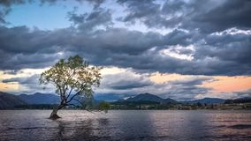 Το δέντρο Wanaka μου στο ηλιοβασίλεμα στη Νέα Ζηλανδία απόθεμα βίντεο