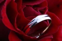 το δαχτυλίδι αυξήθηκε γά& στοκ φωτογραφία