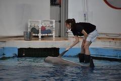 Το δελφίνι παρουσιάζει στη Βαλτιμόρη, Μέρυλαντ Στοκ φωτογραφία με δικαίωμα ελεύθερης χρήσης