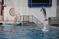 Το δελφίνι παρουσιάζει στη Βαλτιμόρη, Μέρυλαντ Στοκ εικόνες με δικαίωμα ελεύθερης χρήσης