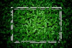 Το δημιουργικό σχεδιάγραμμα, πράσινα φύλλα με το άσπρο τετραγωνικό πλαίσιο, επίπεδο βάζει, στοκ φωτογραφίες με δικαίωμα ελεύθερης χρήσης
