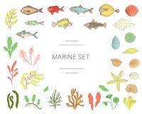 Το διάνυσμα χρωμάτισε το σύνολο ψαριών, κοχύλια θάλασσας, φύκια που απομονώθηκαν στο άσπρο υπόβαθρο απεικόνιση αποθεμάτων