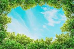Το διάστημα κινηματογραφήσεων σε πρώτο πλάνο του μπλε ουρανού με καλύπτει αραιά με το πράσινο κατασκευασμένο υπόβαθρο δέντρων Στοκ Εικόνες